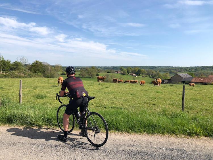Vaches - Limousine Tour 19